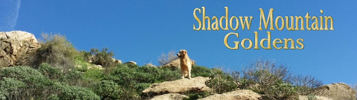 Shadow Mountain Goldens